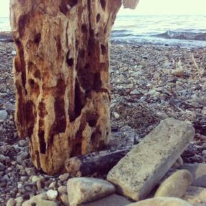 Fundstücke am See