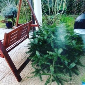 Entschmückter Weihnachtsbaum