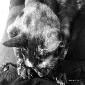 Katze und Knopf