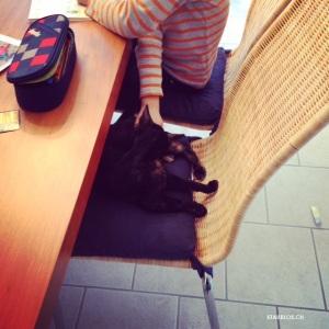 hausaufgaben mit katze