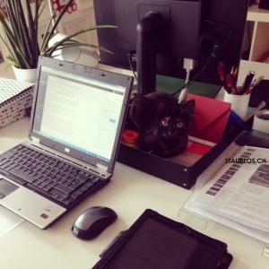 Blogger Katze als Dekokatze