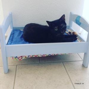 Katze im Puppenbett