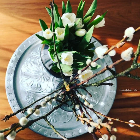 tulpen-weiss